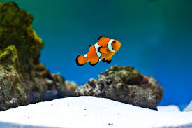 an image of Pet%20Fish%20Care Pet-Fish-Care_1481756490887.jpg