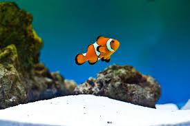 an image of Pet%20Fish%20Care Pet-Fish-Care_1481756490887.jpg